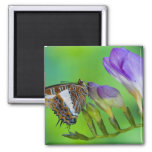 Sammamish, Washington. Tropical Butterflies 14 2 Inch Square Magnet