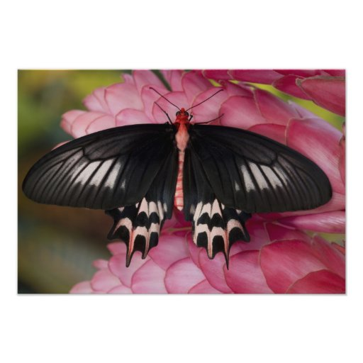 Sammamish, Washington. Tropical Butterflies 14 Photo Print