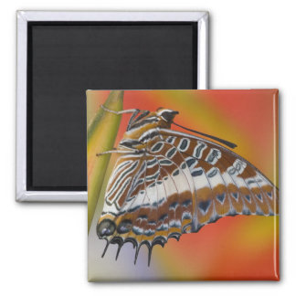 Sammamish, Washington. Tropical Butterflies 15 2 Inch Square Magnet