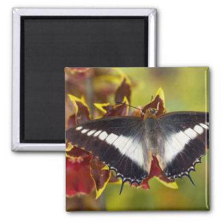 Sammamish, Washington. Tropical Butterflies 16 Refrigerator Magnet