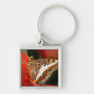 Sammamish, Washington. Tropical Butterflies 17 Keychain