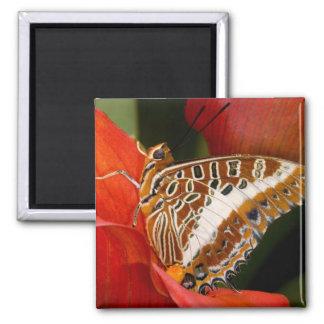 Sammamish, Washington. Tropical Butterflies 17 Fridge Magnet