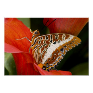 Sammamish, Washington. Tropical Butterflies 17 Poster