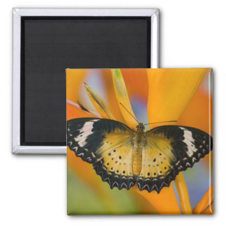 Sammamish, Washington. Tropical Butterflies 18 2 Inch Square Magnet