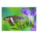 Sammamish, Washington. Tropical Butterflies 18 Photo Print