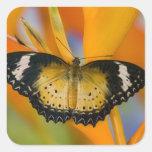 Sammamish, Washington. Tropical Butterflies 18 Square Sticker