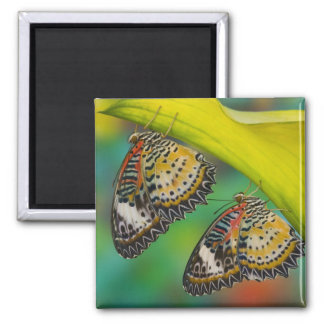Sammamish, Washington. Tropical Butterflies 19 2 Inch Square Magnet