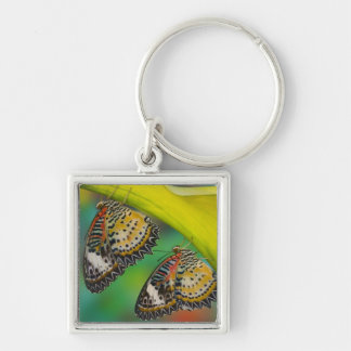 Sammamish, Washington. Tropical Butterflies 19 Keychain