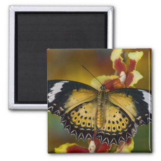 Sammamish, Washington. Tropical Butterflies 20 2 Inch Square Magnet