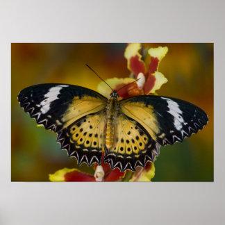 Sammamish, Washington. Tropical Butterflies 20 Poster