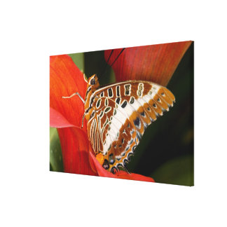Sammamish, Washington. Tropical Butterflies 21 Canvas Print