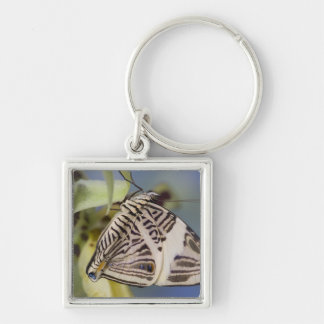 Sammamish, Washington. Tropical Butterflies 21 Keychain