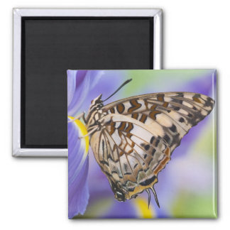 Sammamish, Washington. Tropical Butterflies 22 2 Inch Square Magnet