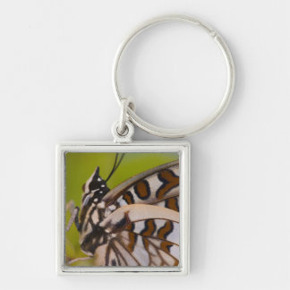 Sammamish, Washington. Tropical Butterflies 23 Keychain