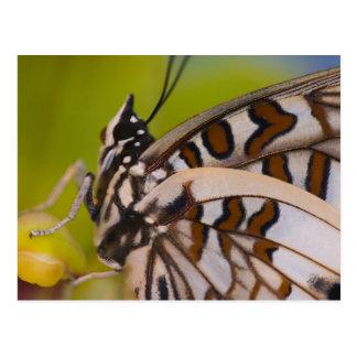 Sammamish, Washington. Tropical Butterflies 23 Postcard