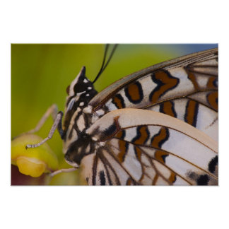 Sammamish, Washington. Tropical Butterflies 23 Poster
