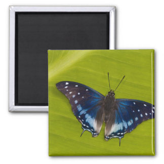 Sammamish, Washington. Tropical Butterflies 24 2 Inch Square Magnet
