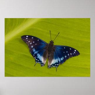 Sammamish, Washington. Tropical Butterflies 24 Poster