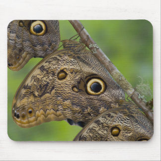 Sammamish, Washington. Tropical Butterflies 25 Mouse Pad