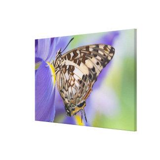 Sammamish, Washington. Tropical Butterflies 26 Canvas Print