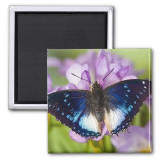 Sammamish, Washington. Tropical Butterflies 26 Fridge Magnet