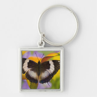 Sammamish, Washington. Tropical Butterflies 27 Keychain