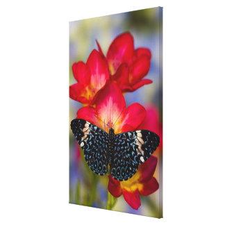 Sammamish Washington Tropical Butterflies 2 Canvas Print