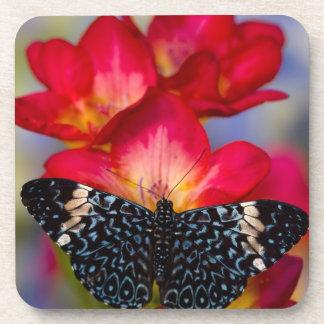 Sammamish Washington Tropical Butterflies 2 Coasters