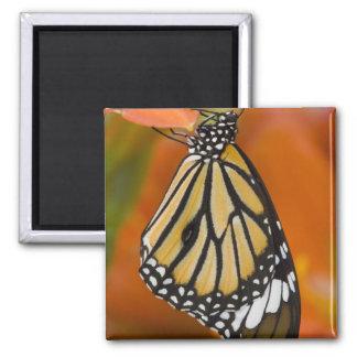 Sammamish, Washington. Tropical Butterflies 2 Magnets