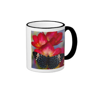 Sammamish Washington Tropical Butterflies 2 Coffee Mug
