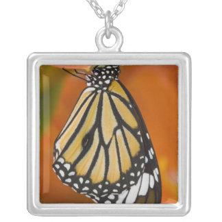 Sammamish, Washington. Tropical Butterflies 2 Square Pendant Necklace