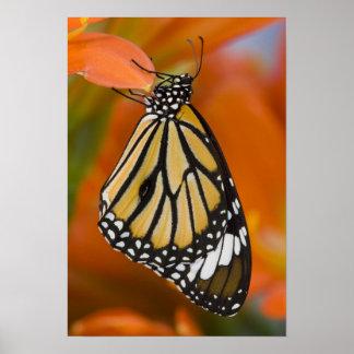 Sammamish, Washington. Tropical Butterflies 2 Poster