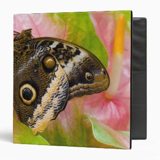 Sammamish, Washington. Tropical Butterflies 30 Binder