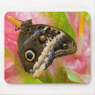 Sammamish, Washington. Tropical Butterflies 30 Mouse Pad