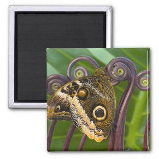 Sammamish, Washington. Tropical Butterflies 31 Magnets