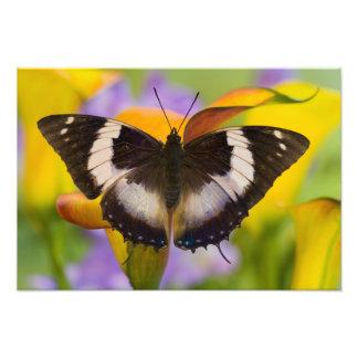 Sammamish, Washington. Tropical Butterflies 31 Photo Print