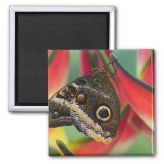 Sammamish, Washington. Tropical Butterflies 32 Fridge Magnets