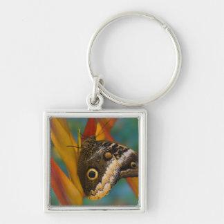 Sammamish, Washington. Tropical Butterflies 33 Keychain