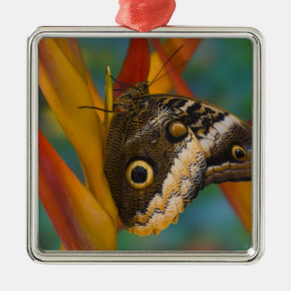 Sammamish, Washington. Tropical Butterflies 33 Metal Ornament