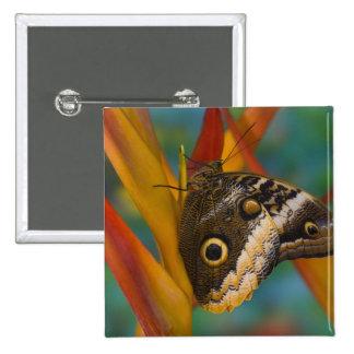 Sammamish, Washington. Tropical Butterflies 33 Pinback Button