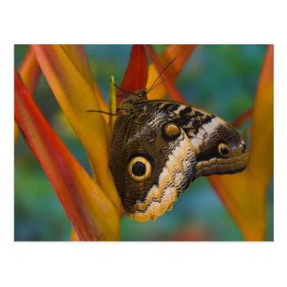 Sammamish, Washington. Tropical Butterflies 33 Postcard