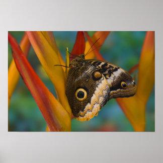 Sammamish, Washington. Tropical Butterflies 33 Poster