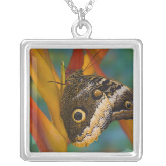 Sammamish, Washington. Tropical Butterflies 33 Silver Plated Necklace