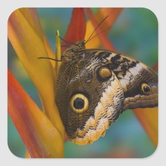 Sammamish, Washington. Tropical Butterflies 33 Square Sticker