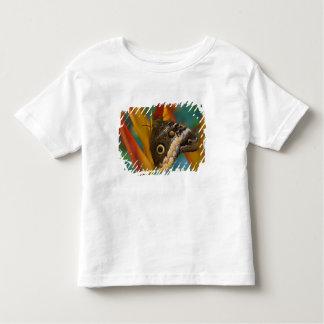 Sammamish, Washington. Tropical Butterflies 33 Toddler T-shirt