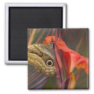 Sammamish, Washington. Tropical Butterflies 34 Magnets
