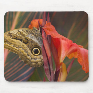 Sammamish, Washington. Tropical Butterflies 34 Mouse Pad