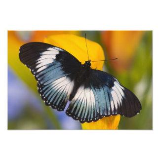 Sammamish, Washington. Tropical Butterflies 34 Photo Print