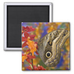 Sammamish, Washington. Tropical Butterflies 35 2 Inch Square Magnet