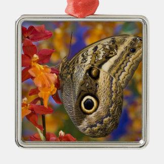 Sammamish, Washington. Tropical Butterflies 35 Christmas Ornament